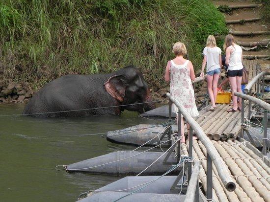 River Kwai Jungle Rafts Resort: os elefantes