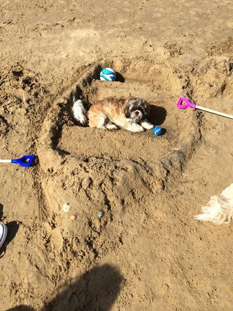 "Wells Next The Sea Beach: Louis says ""all aboard the S.S. Dog!"""