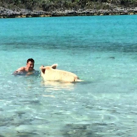 Pig Beach - Big Major Cay: Swimming