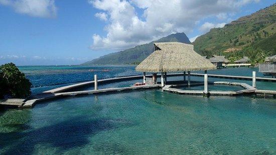 InterContinental Moorea Resort & Spa: Le Delphinarium