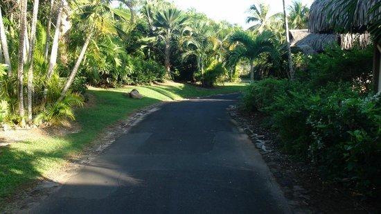 InterContinental Moorea Resort & Spa: Notre rue