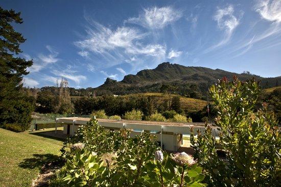 Constantia Glen Winery: Wine farm