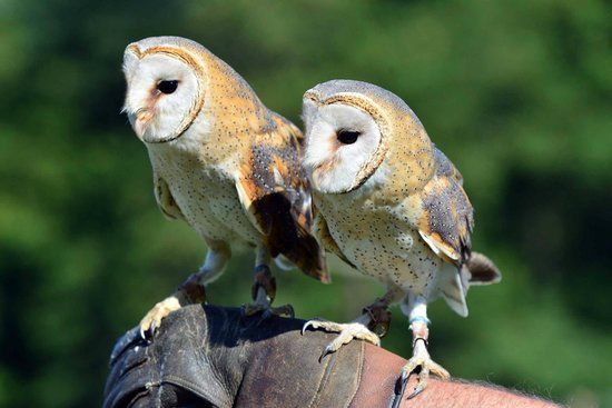 Falconry Experience Wales: the twins