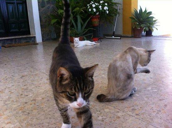 Finca El Juncal: Three of the four cats