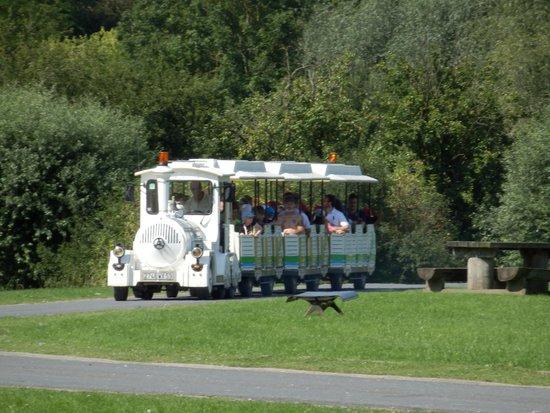 Les Pres du Hem: Le petit train roule autour du lac.