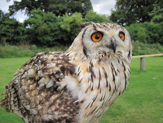 Walworth Castle Birds of Prey: CHEEKY CHIRPY