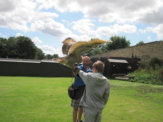 Walworth Castle Birds of Prey: NO it's not a B52 Bomber