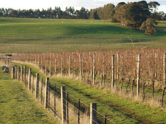 Pierrepoint Wines