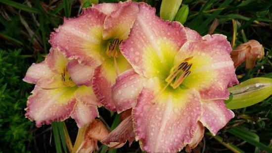The Arboretum: flower 1