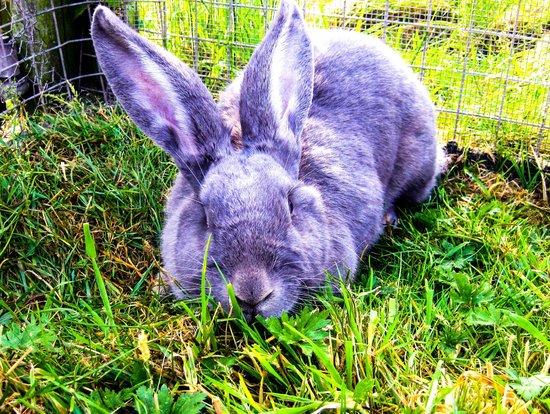 Acorn Farm: Rabbits
