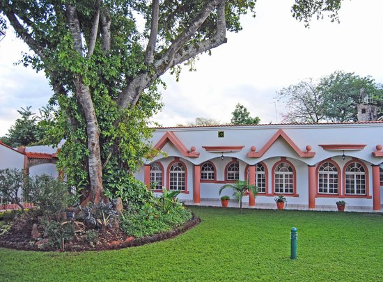 Villa Leone: The Revered Mugumo Tree
