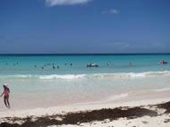 Mr. Delicious: Miami Beach, Barbados