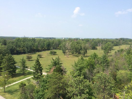 Ouabache State Park: View of the state park from the top of the fire tower you can climb