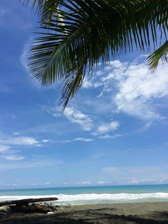 Finca Exotica Ecolodge: plage de Carate : une carte postale de rêve !