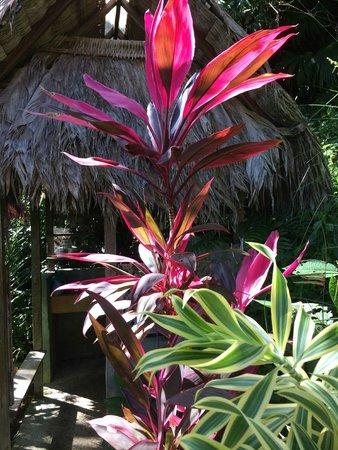 Finca Exotica Ecolodge: les plantes magnifiques et luxuriantes à l'entrée d'une douche privée