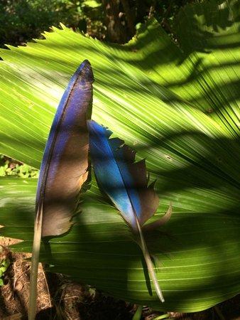 Finca Exotica Ecolodge: plumes de perroquets trouvées sur le parcours
