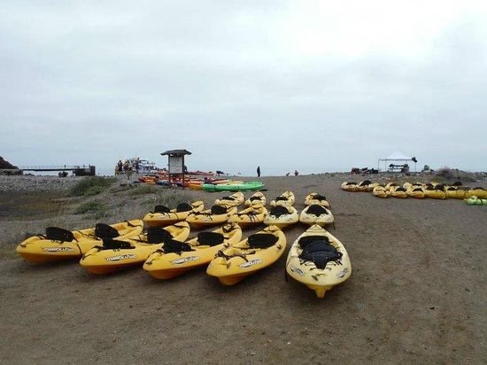 Santa Barbara Adventure Company : SB Adventure kayaks