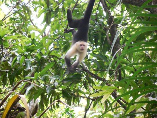 Roca Verde: And Monkeys!