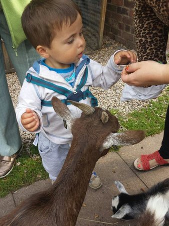 Wetheriggs Animal Rescue Centre: Great place for kids