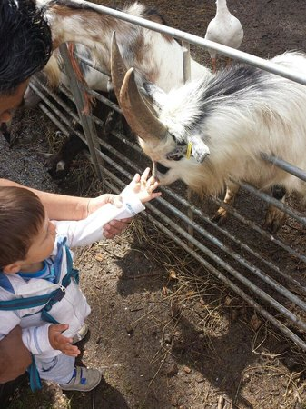 Wetheriggs Animal Rescue Centre: Happy kids and goats