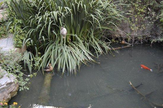 Lago picture of jardin de los sentidos altea tripadvisor for Jardin de los sentidos