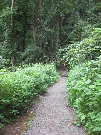 Amicalola Falls State Park: Gorgeous Path