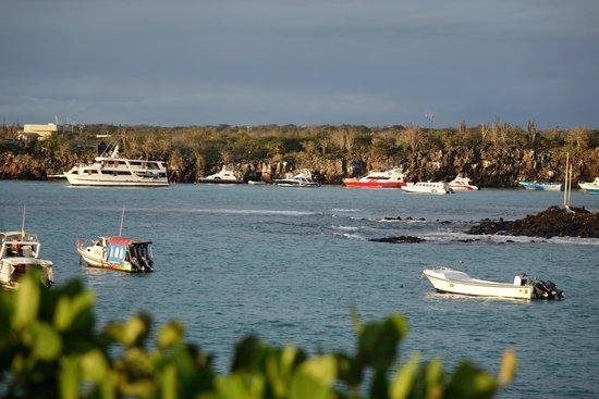 Red Mangrove Ecoluxury Hotel: Ocean view