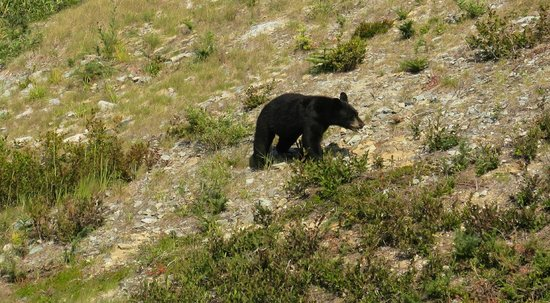 Peak to Creek: Bear Cub as seen from Chair Lift