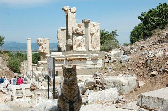 Ancient City of Ephesus: A cat at Ephesus