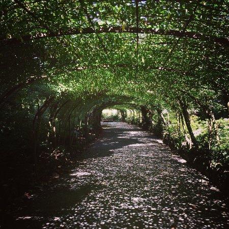 Bodnant Garden: Laburnum archway