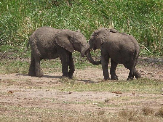 Queen Elizabeth National Park: Elephants