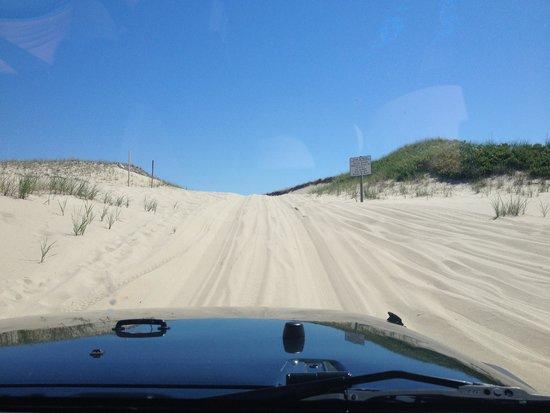 Race Point Beach : Dunes
