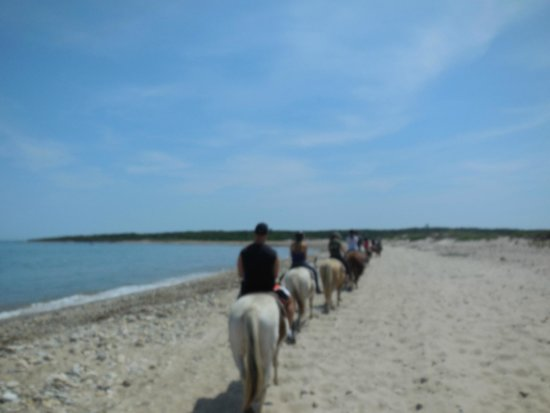 "Montauk Blue Hotel: beach at ""the End"" horseback riding $$$"
