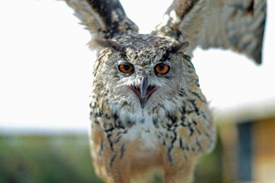L'Aquashow : Spectacle des oiseaux