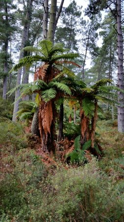 Wai-O-Tapu Thermal Wonderland: Silver ferns