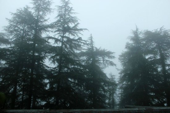 Shimla British Resort: surrounded by pines