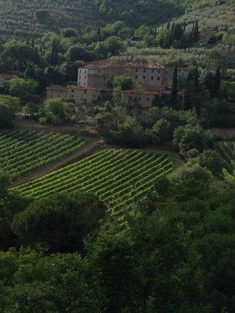 Le Capanne Agriturismo : Uitzicht