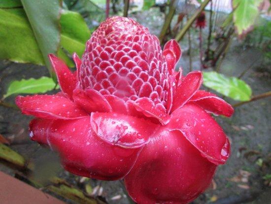 Hacienda Gripinas: one of many local flowers
