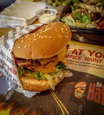 The Habit Burger Grill: Double Char Burger with Cheese