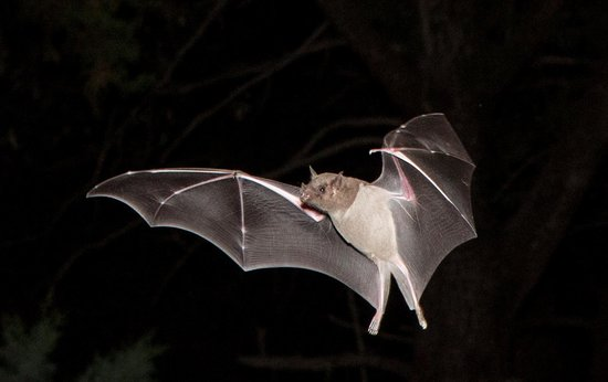 Santa Rita Lodge: Also Bats come in to feed at night