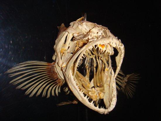 Monterey Bay Aquarium : fossil
