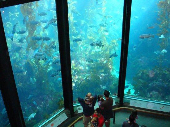 Monterey Bay Aquarium : topside
