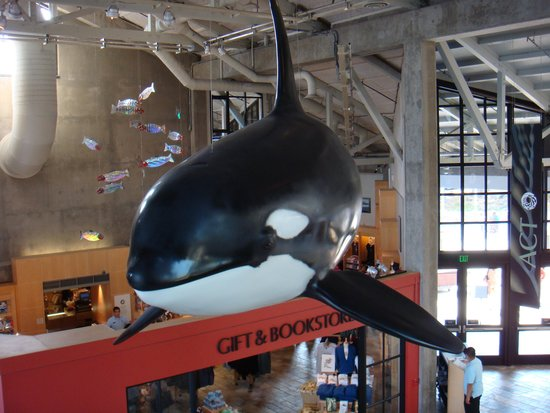 Monterey Bay Aquarium: Killer Whale