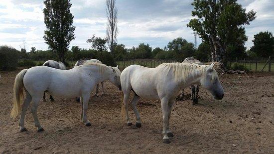 Soirée Mas de la Comtesse : Les chevaux sublimes
