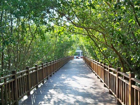 Paradisus Playa del Carmen La Perla: Walkway to beach