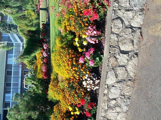 The Cedarwood Inn and Suites: motel garden