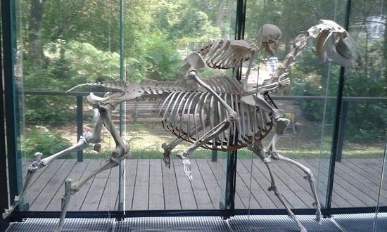 Museum of Natural History: le mur des squelettes..... incroyable
