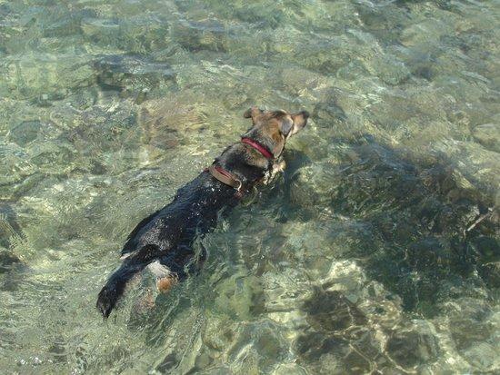 Île Sainte-Marguerite: Glasklares Wasser