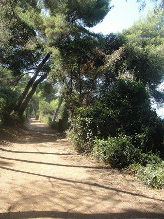 Île Sainte-Marguerite: Wanderweg