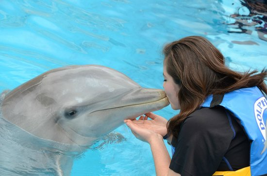 Dolphin Discovery Six Flags: Beso <3